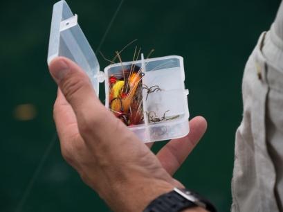 spanishsalmonflies