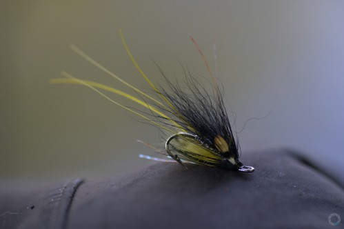 salmon fly