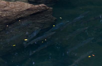 salmonfishingguides